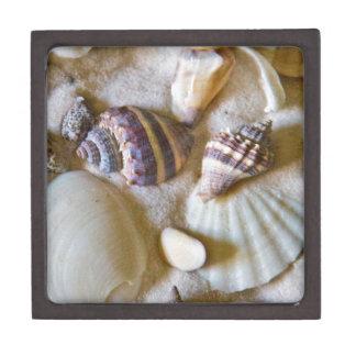 Strand-Muschel-Thema #2 Kiste