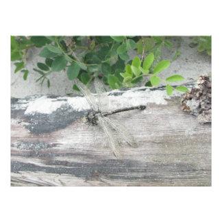 Strand-Sandlibellen-Fotodruck Neuschottland Fotodruck