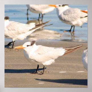 Strand-Vogeldruck Poster