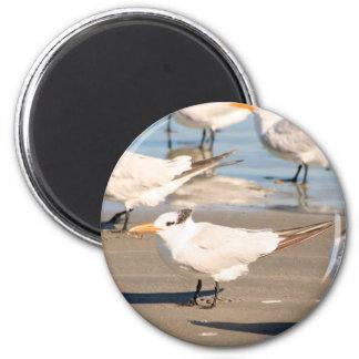 Strand-Vogelmagnet Runder Magnet 5,7 Cm