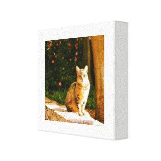 Straßenkatzenporträt Leinwanddruck