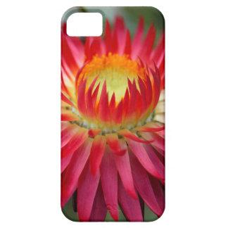 Strawflower (Xerochrysum bracteatum) iPhone 5 Etui