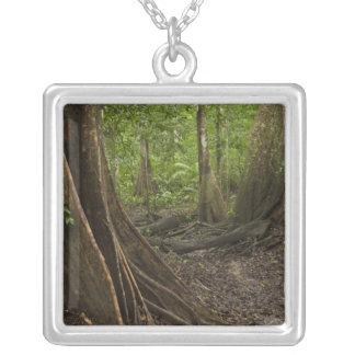 Strebepfeiler-Wurzeln. Regenwald, Mapari Rupununi, Versilberte Kette