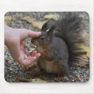 streichen Sie ein Eichhörnchen Mousepads