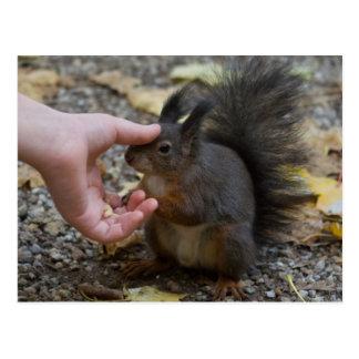 streichen Sie ein Eichhörnchen Postkarte