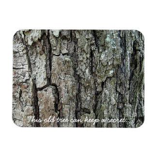 Streifen Sie diesen alten Baum kann ein Geheimnis Magnet