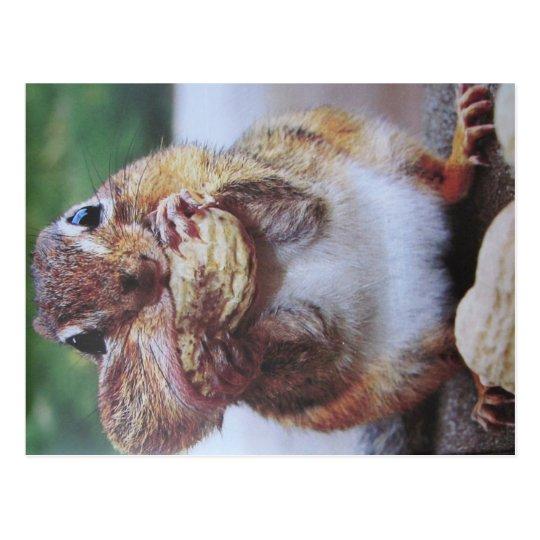 Streifenhörnchen- Postkarte