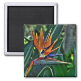 Strelitzia - Teneriffa-Blume Quadratischer Magnet