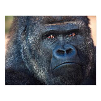 Strenges Gorilla-Gesicht Postkarte