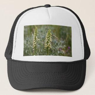 Strohfingerhut (Fingerhut lutea ssp australis) Truckerkappe