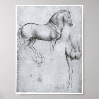 Studie der Pferde, Leonardo da Vinci Poster