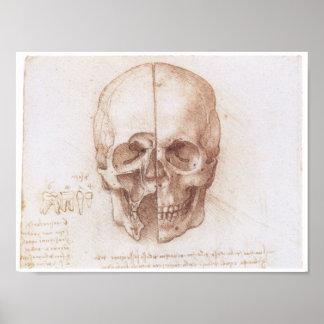 Studie des menschlichen Schädels, Leonardo da Vinc Poster