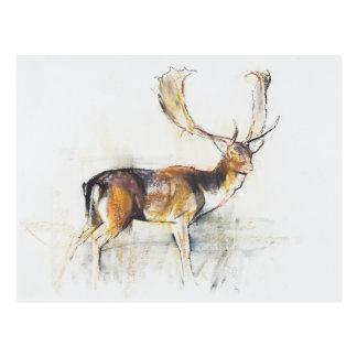 Studie eines Hirsches Postkarte