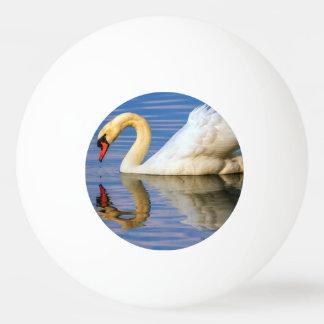 Stummer Schwan, Cygnus olor Ping-Pong Ball