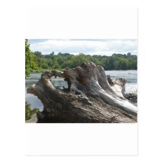 Stumpf auf James River Postkarte