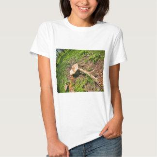 Stumpf des Schnittbaums am Rand des Waldes Hemd