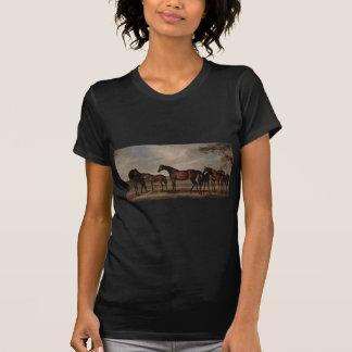Stuten und Fohlen sind vor einem auftauchenden T-Shirt