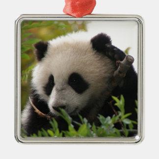 SU Lin, PandaBärenjunges am San Diego Zoo Silbernes Ornament