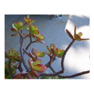 Succulent auf einer Oxnard Plattform….der Entwurf Postkarte