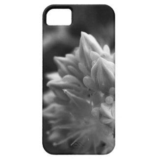 SucculentBouquet iPhone 5 Hüllen