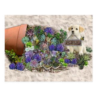 Succulents für Verkauf Postkarte