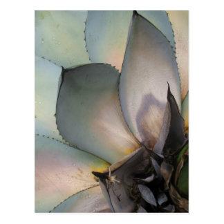 Succulents - WOWCOCO Postkarte