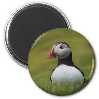 Suchen nach dem Bau-Papageientaucher Runder Magnet 5,1 Cm
