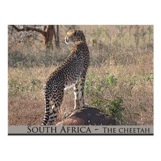 Südafrika - der Gepard Postkarte