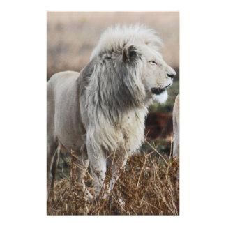 Südafrika-Löwe als König Briefpapier