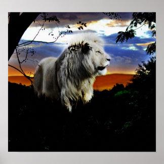 Südafrika-Löwe im Dschungel Poster