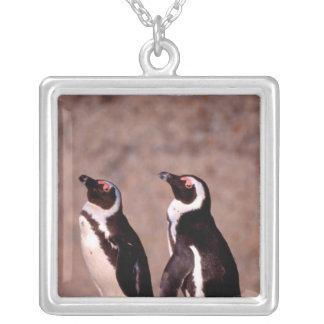 Südafrika, Simons Stadt. Esel-Pinguine 2 Versilberte Kette
