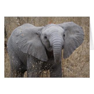 Südafrikanischer Baby-Elefant Karte