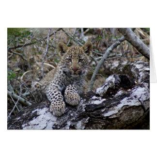 Südafrikanischer Leopard CUB Karte