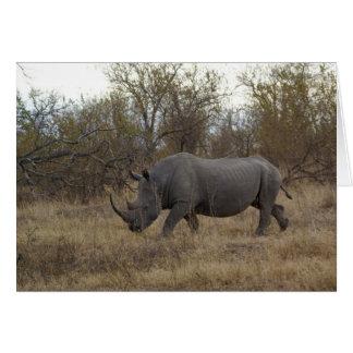 Südafrikanisches Nashorn Karte