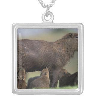 Südamerika, Brasilien, Pantanal Capybara Versilberte Kette