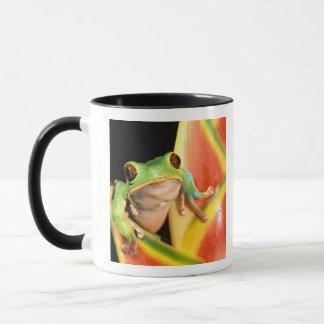 Südamerika, Ecuador, Amazonas. Baumfrosch Tasse