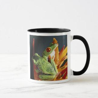 Südamerika. Rot-mit Augen Baumfrosch Agalycmis Tasse