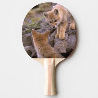 Südamerikanische Paare grauen Fox (Lycalopex Tischtennis Schläger