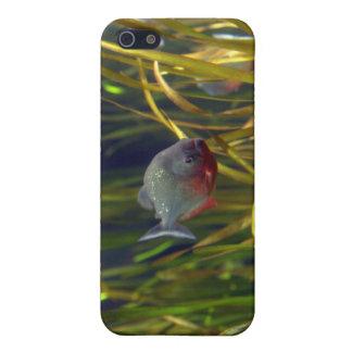 Südamerikanischer Piranha-Fische iPhone Fall iPhone 5 Etui