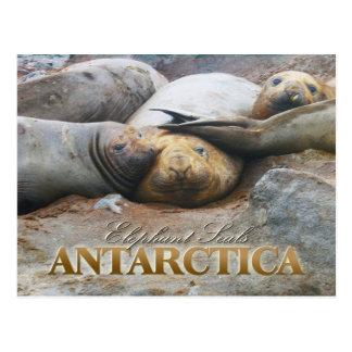 Südliches Elefant-Siegel, antarktische Halbinsel Postkarte