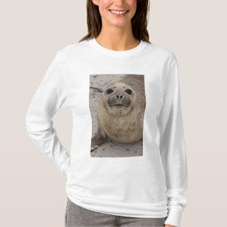 Südliches Elefant-SiegelMirounga leonina) T-Shirt