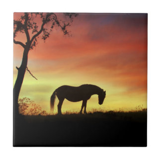 Südwestliches Farbpferd im Sonnenaufgang Kleine Quadratische Fliese