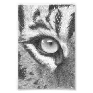 Sumatra Tiger Auge - Bleistiftzeichnung Fotodruck
