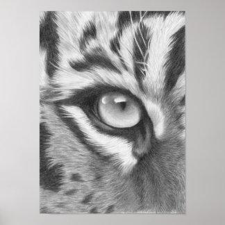 Sumatra Tiger Auge - Bleistiftzeichnung Poster