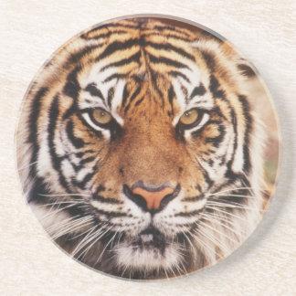 Sumatran Tiger, Panthera der Tigris Getränkeuntersetzer