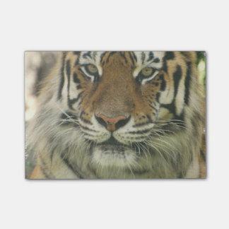 Sumatran Tiger Post-it Klebezettel