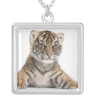 Sumatran Tigerjunges Versilberte Kette