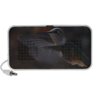 Summenvogel Speaker