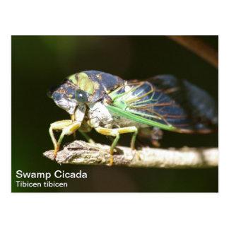 Sumpf-Zikade Postkarte