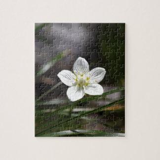 Sumpfgras von Parnassus (Parnassia palustris) Puzzle